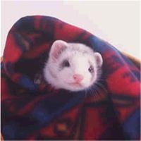 Мягкое и гипоаллергенное одеяло (плед) для хорьков